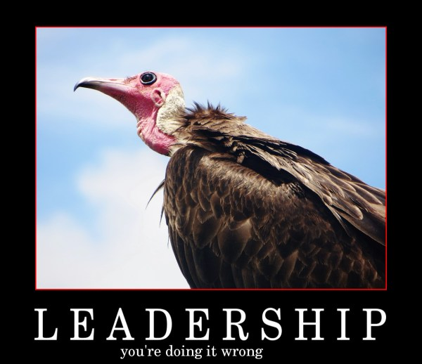 vulture-724431_960_720