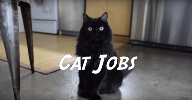 "From ""box inspector"" to ""gravity checker,"" a comprehensive list of cat jobs"