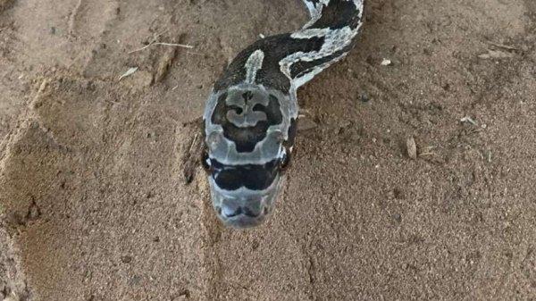 snakeeeee
