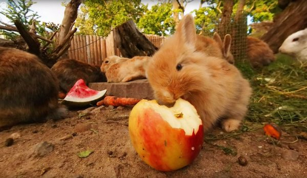 omg someone stuck a 360 camera in a bunny pen boing boing