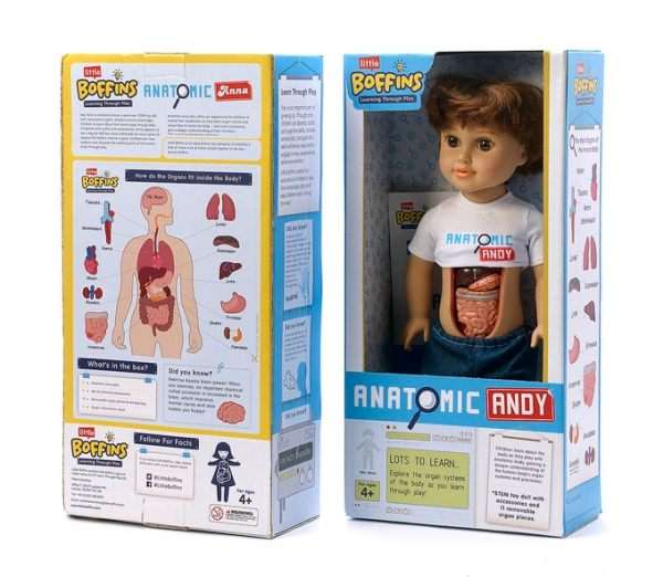Anatomy doll with removable organs
