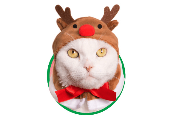 Cat Christmas.Things Cats Hate Christmas Bonnets Boing Boing
