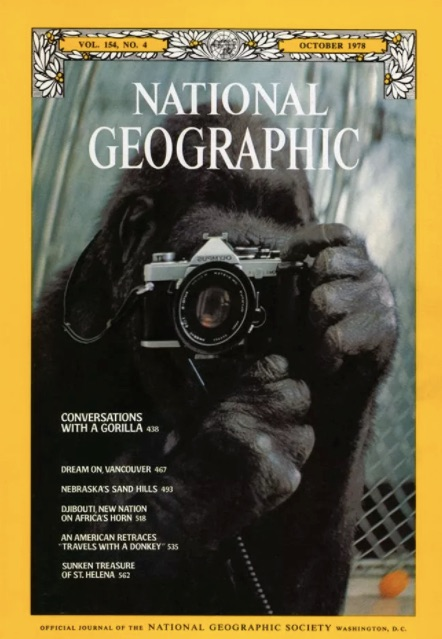 See 130 years of National Geographic covers in two minutes