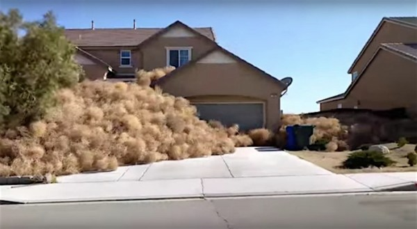 Tumbleweeds invade a California town and residents have to call 911