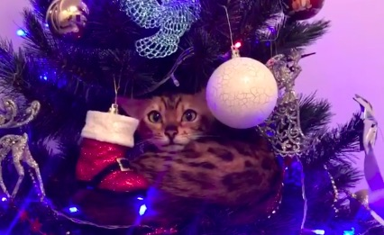 Cats Nesting in Christmas Trees
