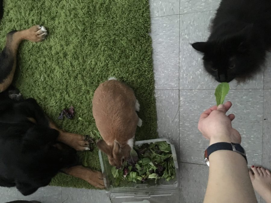 Dog thinks he's a bunny and also wants lettuce, now cat wants some too