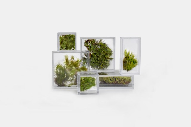 Stackable desktop microterrariums