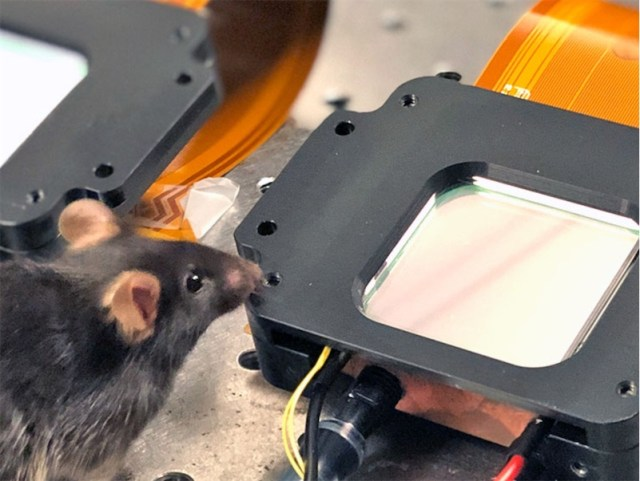"""Scientists control mouse neurons so the rodents """"see"""" things that aren't there"""