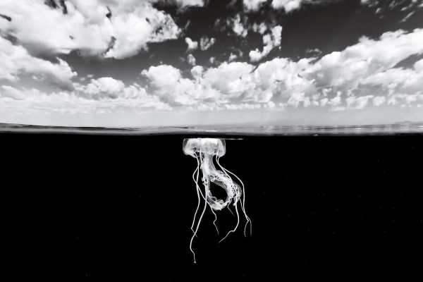Black and white photo of jellyfish, by Christian Vizl