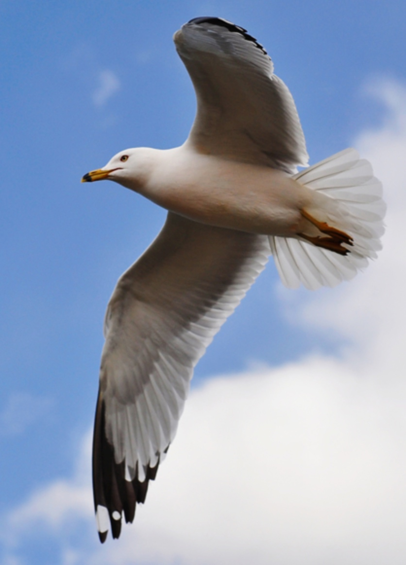 Seagull helps man avoid weed bust