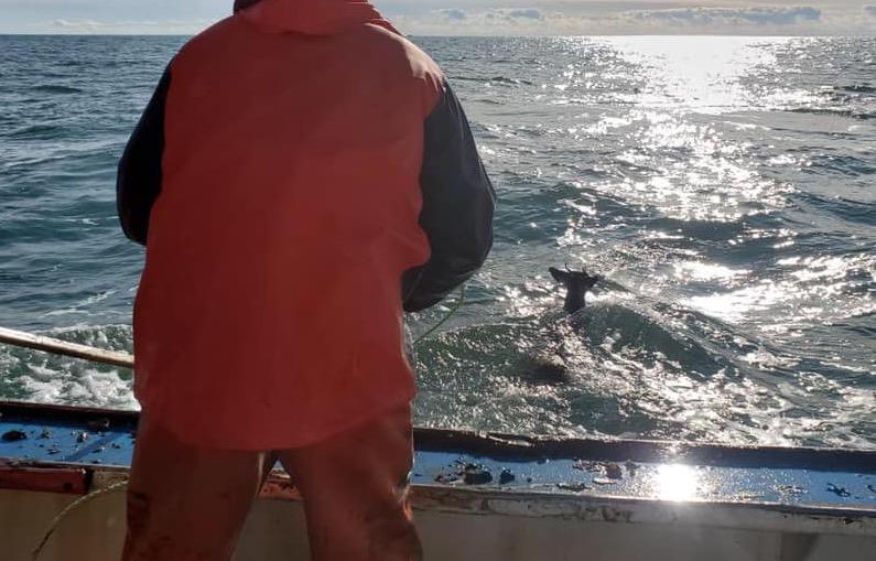 Fishermen rescue deer floating at sea 5 miles off Maine coast