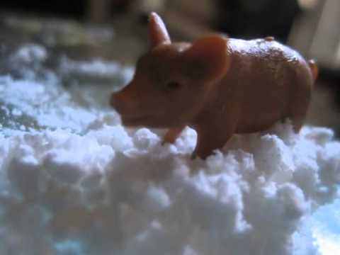 Feral hogs find and destroy cocaine stash in woods