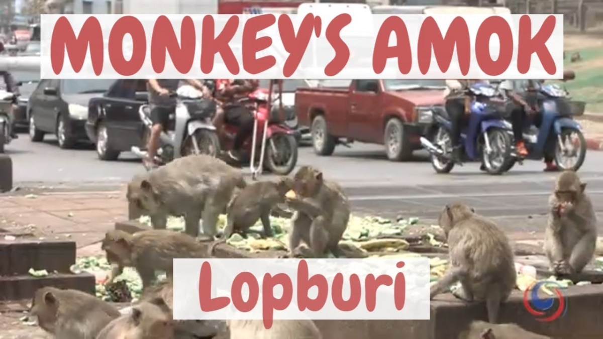 Macaques have colonized a city in Thailand and converted a movie theatre into a cemetery
