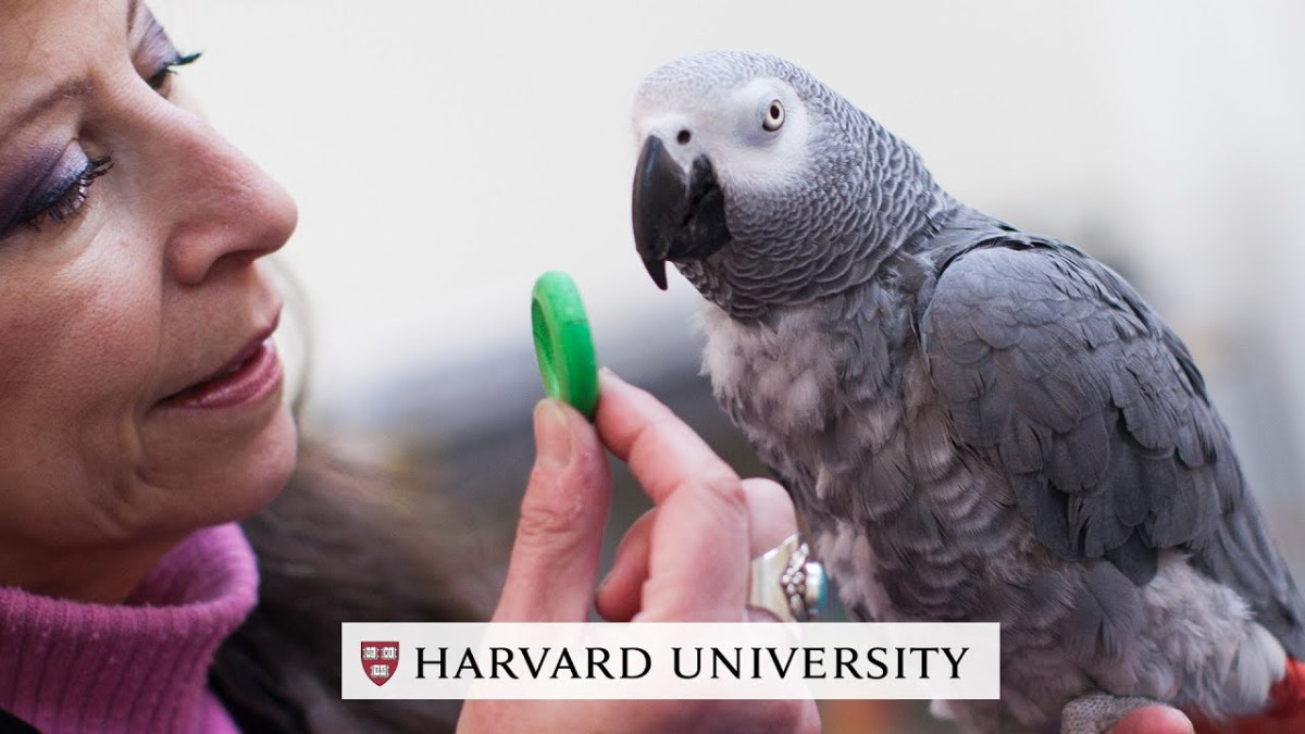 Researchers at Harvard recently conducted an odd experiment in visual memory. They selected 21 Harvard undergrads and 21 6- to 8-year-old children, an