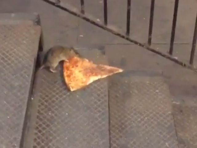 'Pizza Rat' Enchants Social Media