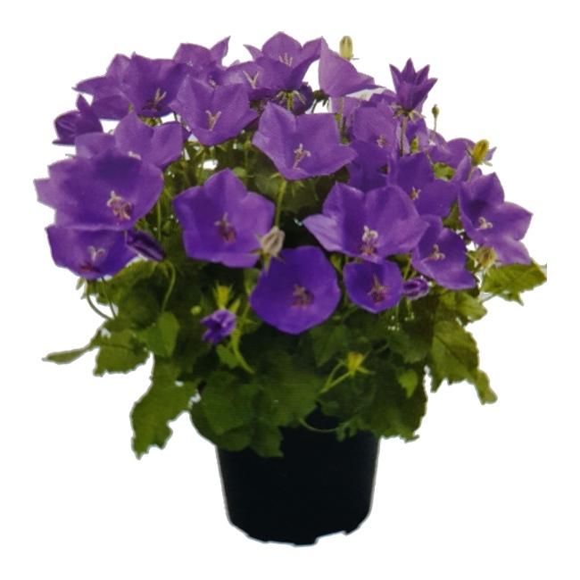 Sztuczne Kwiaty Doniczkowe Castorama Castorama Opp Torf