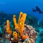 Cayman marine environment worth near $200M