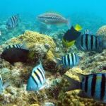 DoE hits the road to talk about marine conservation