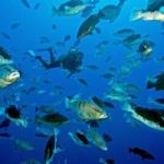 DoE urges conservation of dwindling fish stocks