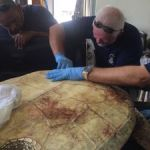DoE and vets rush to save poached turtle