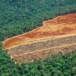Cayman plays part in Amazon deforestation