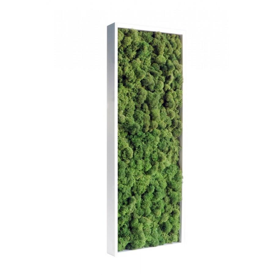 Tableau De Lichen Stabilis Vert Naturel