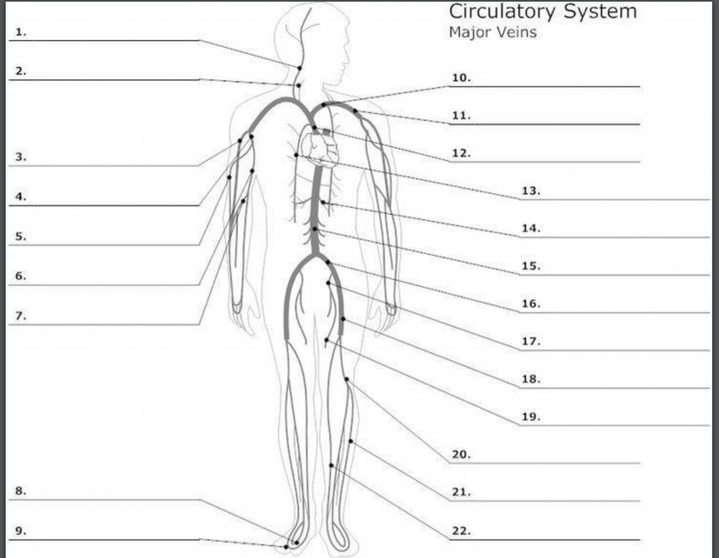 Solved Label The Veins