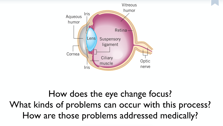 Why Don T Our Eyeballs Fill Up With Water When We Swim Science