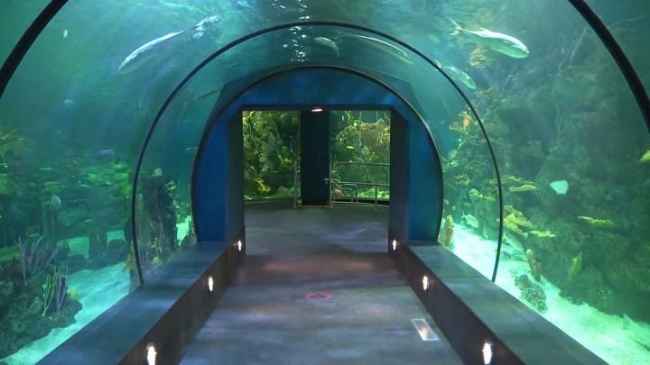 moody gardens aquarium pyramid | Frameswall.co
