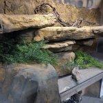 Diy Reptile Enclosure Ledge Kits Reptile Products Universal Rocks