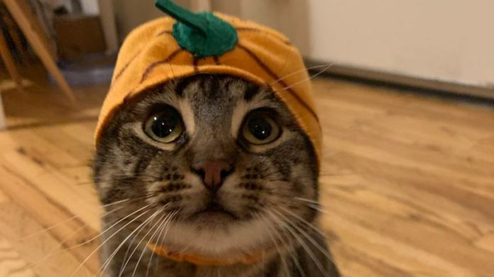 Archie McPhee Loving Friends Kitty Cuddle Costumes, Pumpkin
