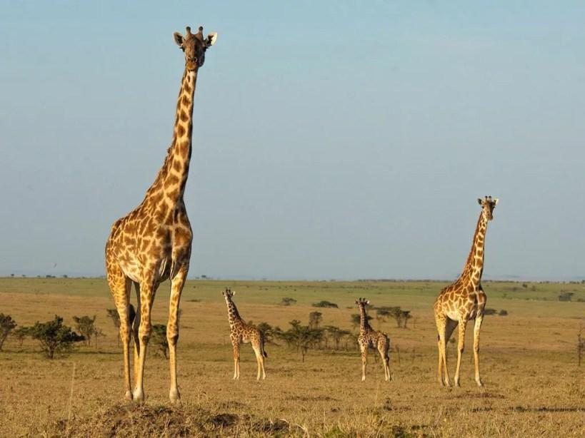 Safari in October