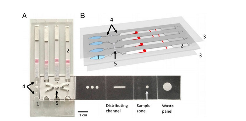 Revolutionary technology allows origami to test for malaria 4