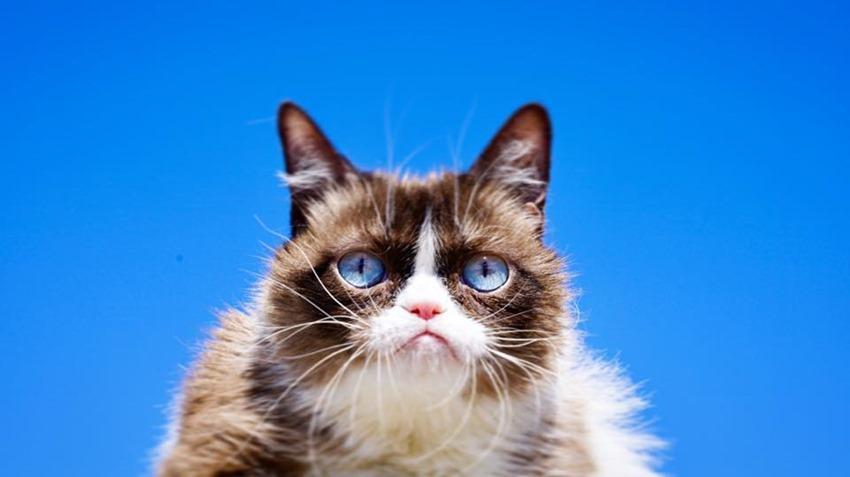 Internet star 'Grumpy Cat' dies at age 7