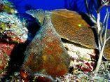 estudio-arrecifes-mesofoticos-23