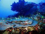 estudio-arrecifes-mesofoticos-24