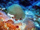 estudio-arrecifes-mesofoticos-25