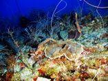 estudio-arrecifes-mesofoticos-3