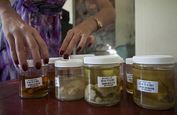 Algunas de las muestras colectadas durante la expedición. Foto: Irene Pérez/ Cubadebate.