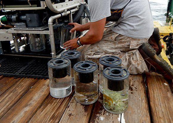 Los frascos del carrusel de succión con las muestras recolectadas. Foto: Patricia González/ICIMAR.