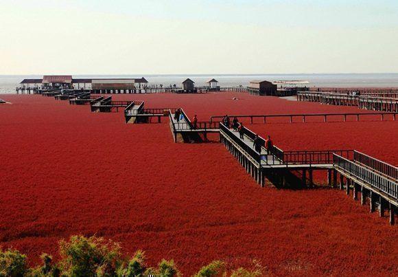 La Playa Roja de Pajín, China. Foto: getty Imagenes.