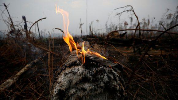 Un tramo de la selva amazónica después de un incendio en Boca do Acre, estado de Amazonas, Brasil. 24 de agosto de 2019. Foto: Bruno Kelly / Reuters