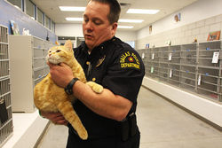 "Lieutenant Scott Walton, interim division manager at Dallas Animal Services, has demonstrated his ""compassion"" charge to shelter workers by fostering shelter  kittens at home. He believes ""responsible pet ownership,"" including strict adherence to spay and neuter laws, will be the best long-term solution for the shelter."