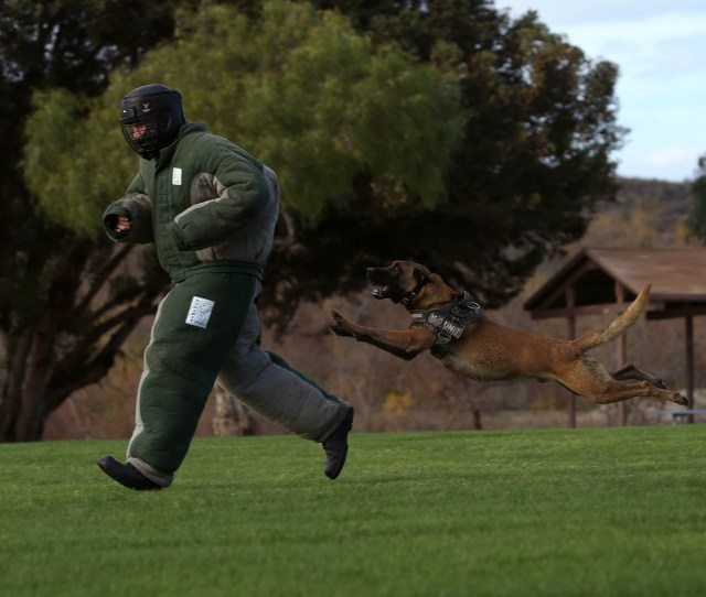 Military Working Dog Dixie Trains His Attacks During The Hardest Hitting Dog Competition During The Iron