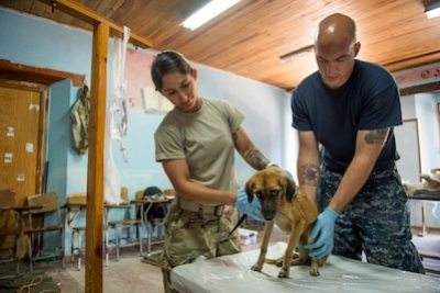 Army Sgt. Katia Rivera, assigned to Public Health Activity-Fort Belvoir, Va., and Navy Petty Officer 2nd Class Nathan Rock, attached to Naval Station Everett, Wash., inspect a dog for fleas during a veterinary checkup in support of Continuing Promise 2017's visit to Trujillo, Honduras, Feb. 24, 2017. Navy photo by Petty Officer 2nd Class Shamira Purifoy