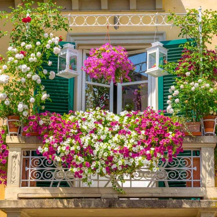 Best Balcony Garden Design Ideas For 2021 Design Cafe