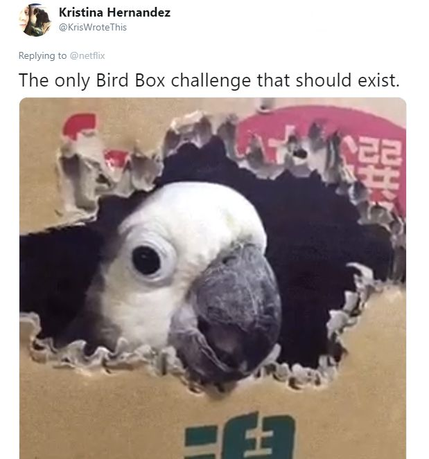 Netflix Wants People To Stop The Bird Box Challenge Before They