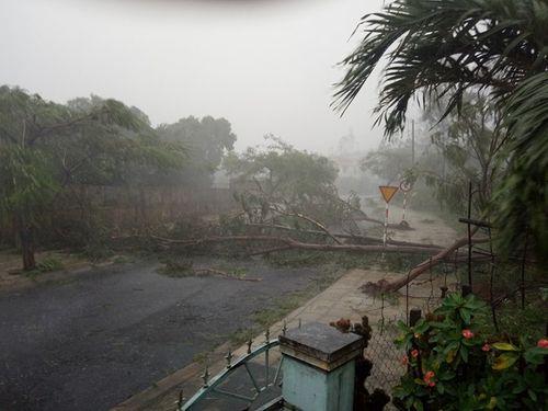 Bão số 12 sức gió trên 100 km/h tàn phá Khánh Hòa, Phú Yên (Cập nhật) - Ảnh 5