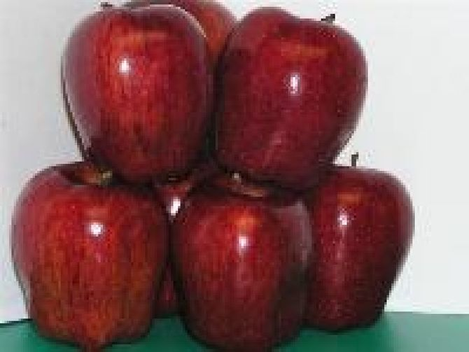 Đại sứ quán Mỹ nói gì vụ táo Mỹ nhiễm khuẩn? - Ảnh 1