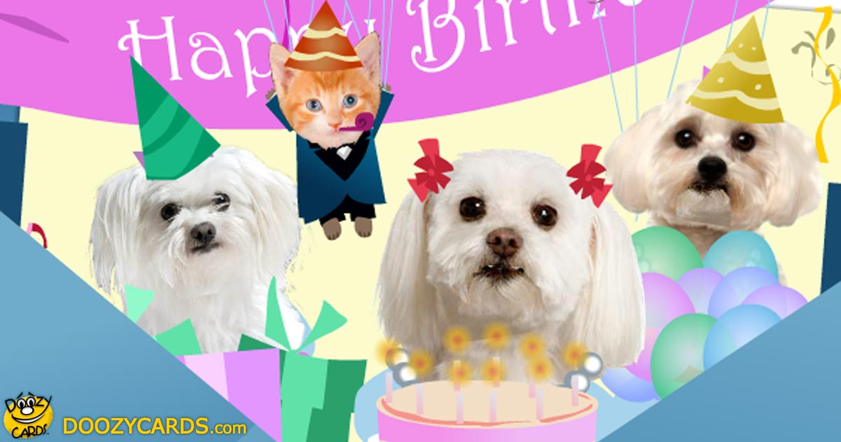 Birthday Greetings With Dogs Singing Birthday E Cards
